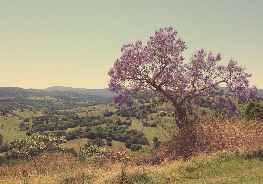 dream_fields_purpletree
