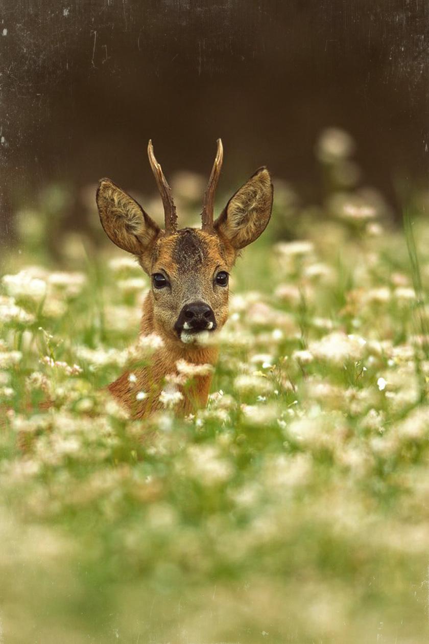 dreams_bambi_scratches