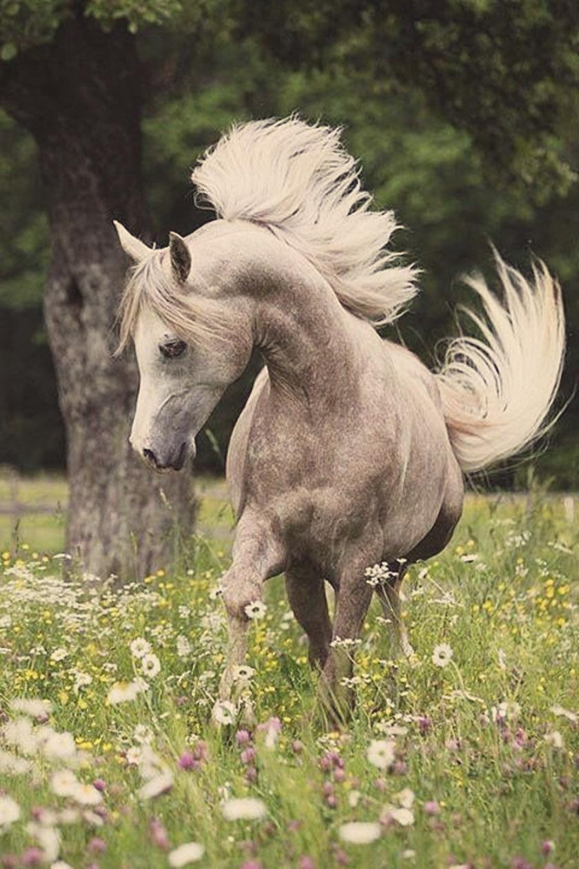 dreams_horsehair