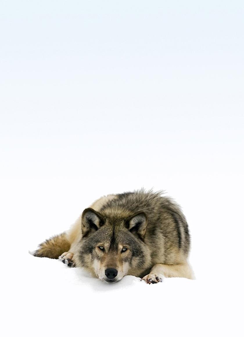 fox1313